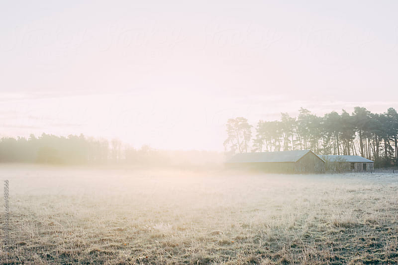 Sunrise and mist on a frost covered winter morning.  by Liam Grant for Stocksy United