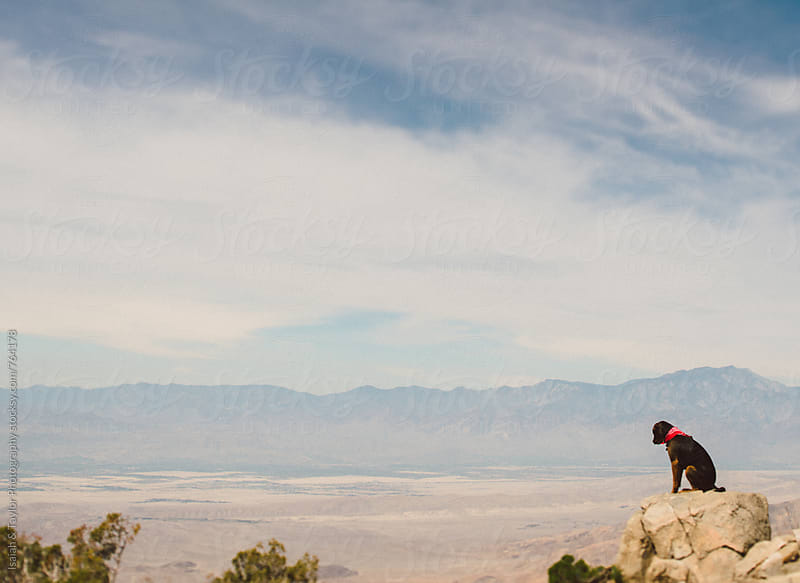 Dog alone in the desert by Isaiah & Taylor Photography for Stocksy United