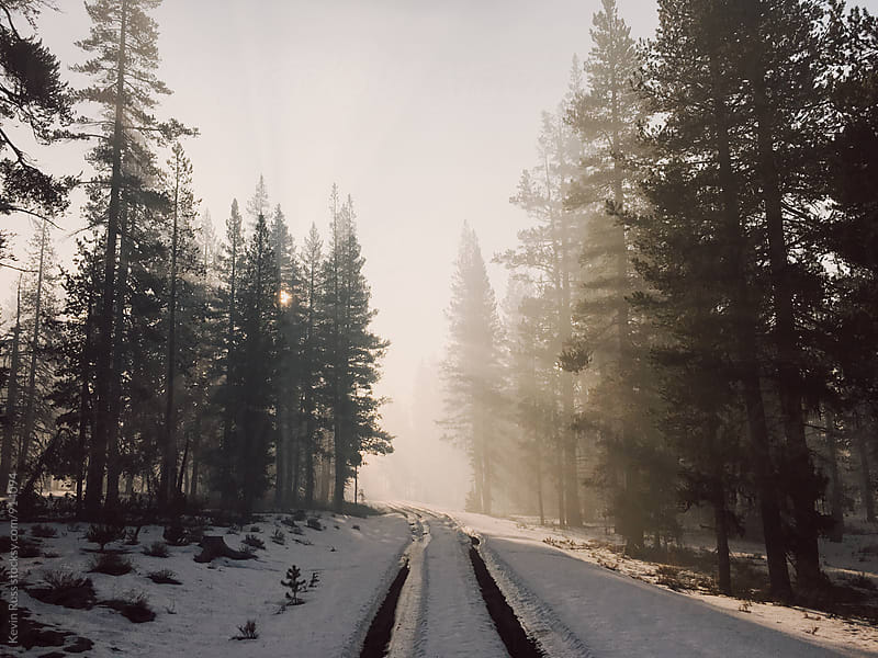 Sunlit Snowy Treelined Road by Kevin Russ for Stocksy United