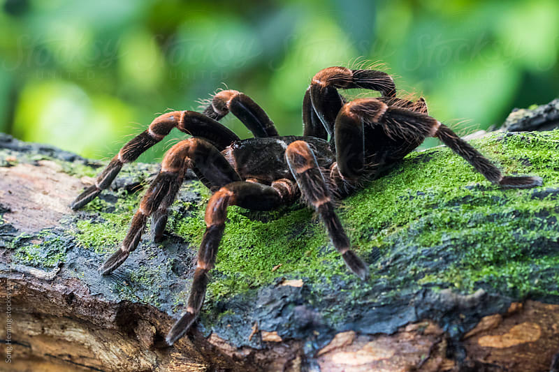 Scene of a spider on the  wood by Song Heming for Stocksy United