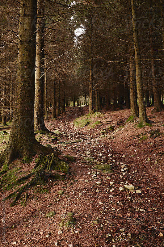 Path through forest near Blea Tarn. Cumbria, UK. by Liam Grant for Stocksy United
