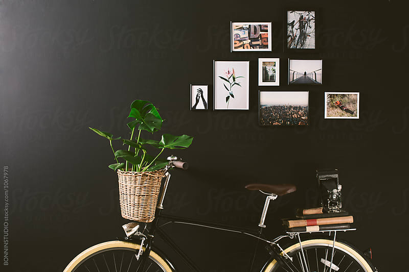 Closeup of a vintage bicycle holding a plant in a basket in front of a black wall.  by BONNINSTUDIO for Stocksy United