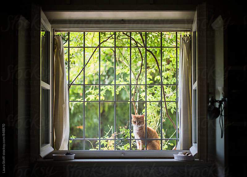 Red cat sits out of window behind closed mosquito net and waits by Laura Stolfi for Stocksy United