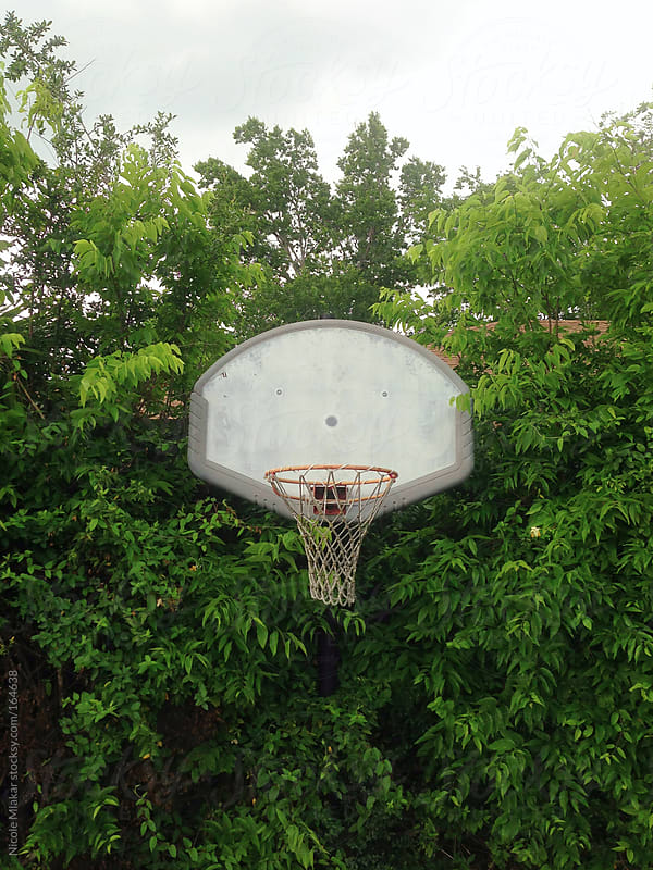 Basketball hoop in trees by Nicole Mlakar for Stocksy United