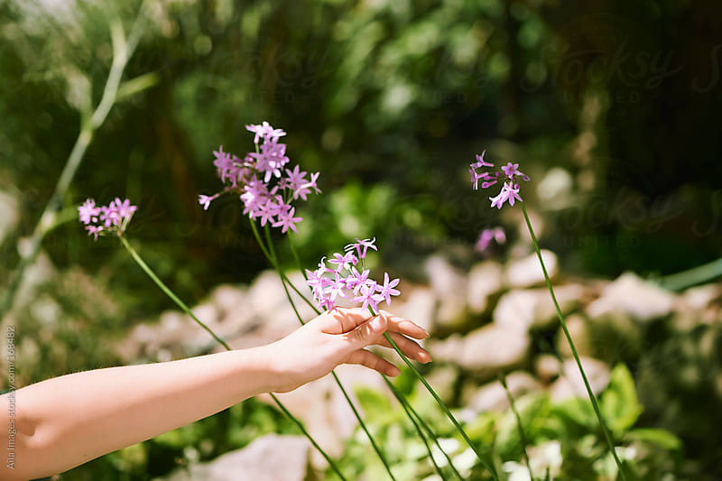 Girl Picking Flowers by Aila Images for Stocksy United