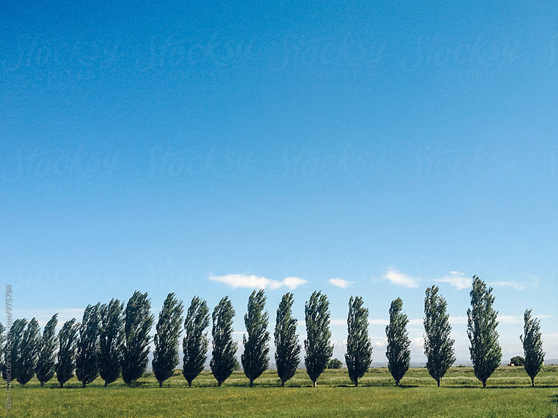 Row of trees in the green field by Jordi Rulló for Stocksy United