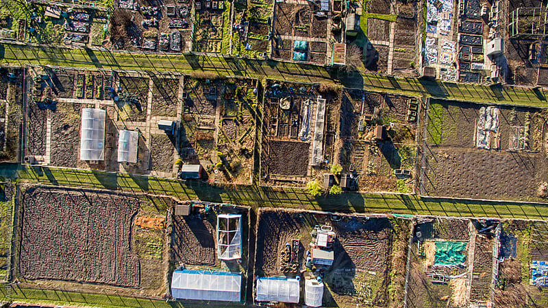 A group of communal vegetable gardens seen from above by Andy Campbell for Stocksy United