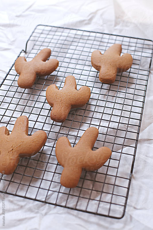 Home made gingerbread cookies in the shape of a cactus on cooling rack by Natalie JEFFCOTT for Stocksy United