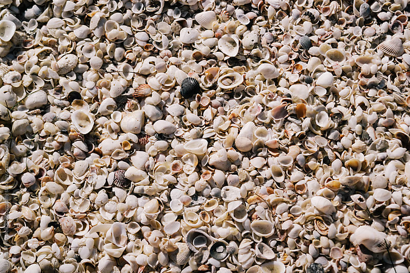 Sea shells on the sea shore. by Dylan M Howell Photography for Stocksy United