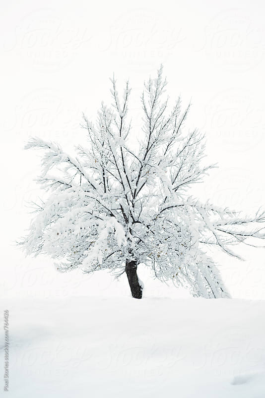 Snowy tree by Pixel Stories for Stocksy United