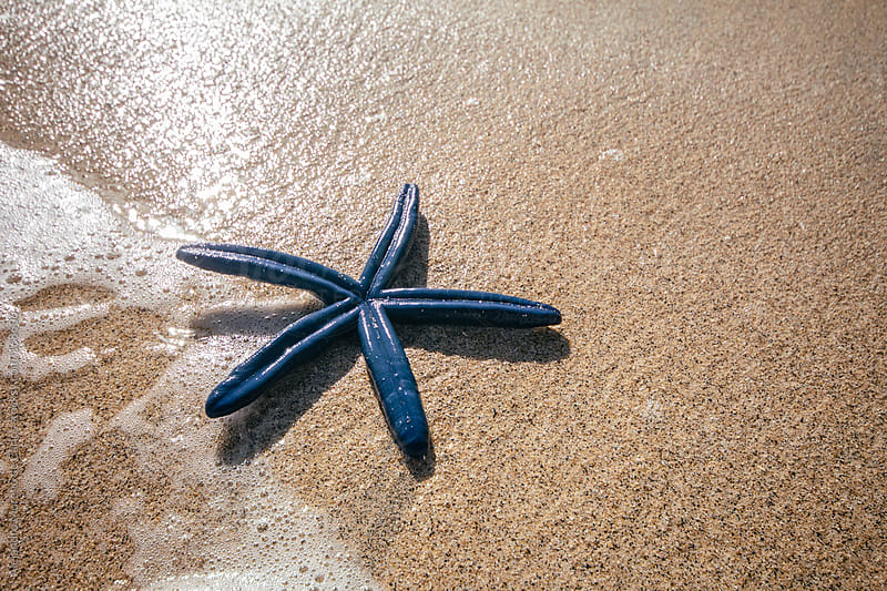 Blue starfish on the beach by Alejandro Moreno de Carlos for Stocksy United