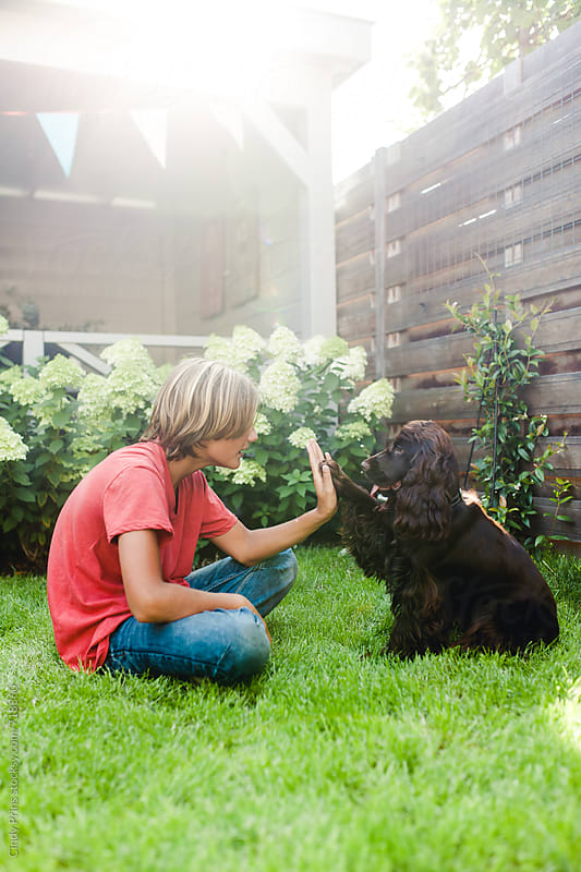 English cocker spaniel dog giving paw to boy in the garden by Cindy Prins for Stocksy United