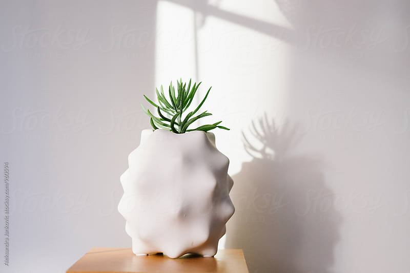 Houseplant by Aleksandra Jankovic for Stocksy United