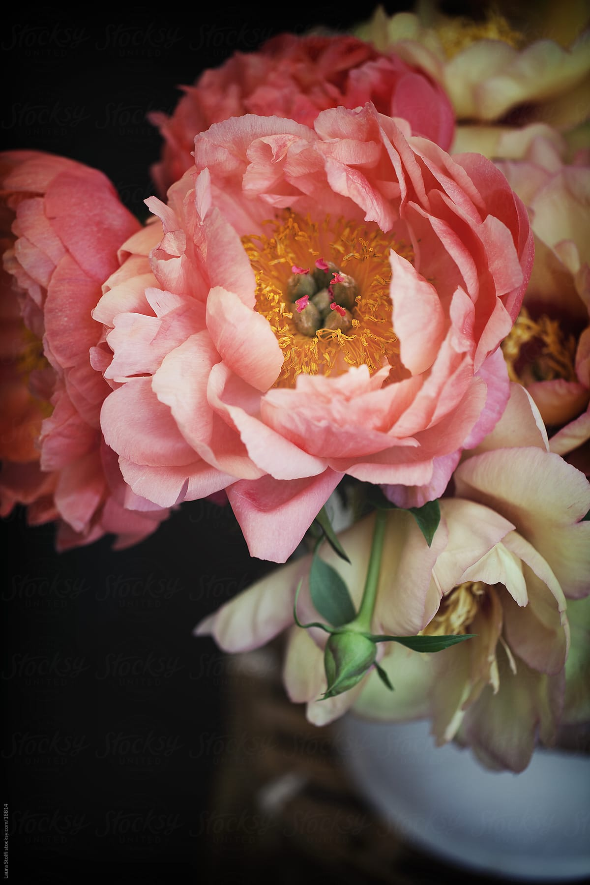 Detail Of Orange Pink And Yellow Peonies Bouquet In Enamel Old Can By Laura Stolfi Flower Coral Stocksy United