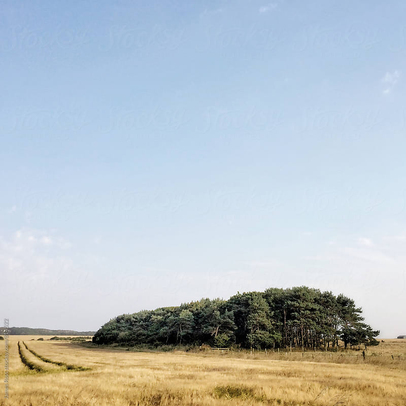 A field of wheat with a copse by James Ross for Stocksy United
