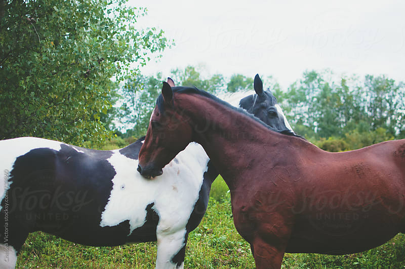 Horses grooming each other by Chelsea Victoria for Stocksy United