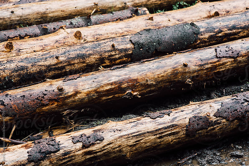 Wood log texture by Boris Jovanovic for Stocksy United