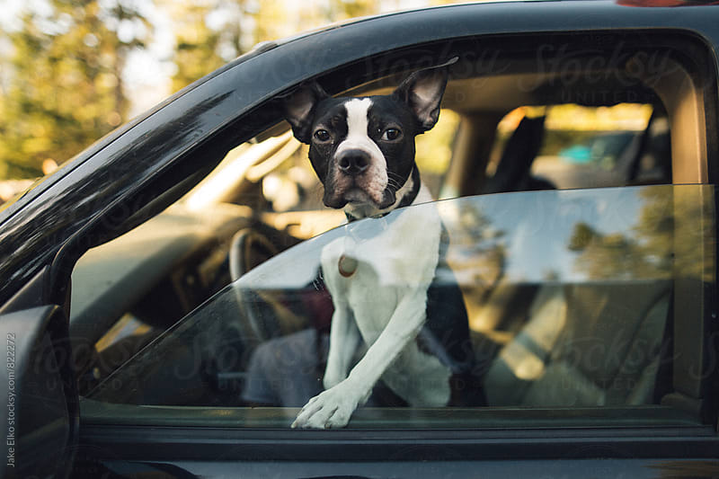 Dog Adventures in Yellowstone National Park by Jake Elko for Stocksy United