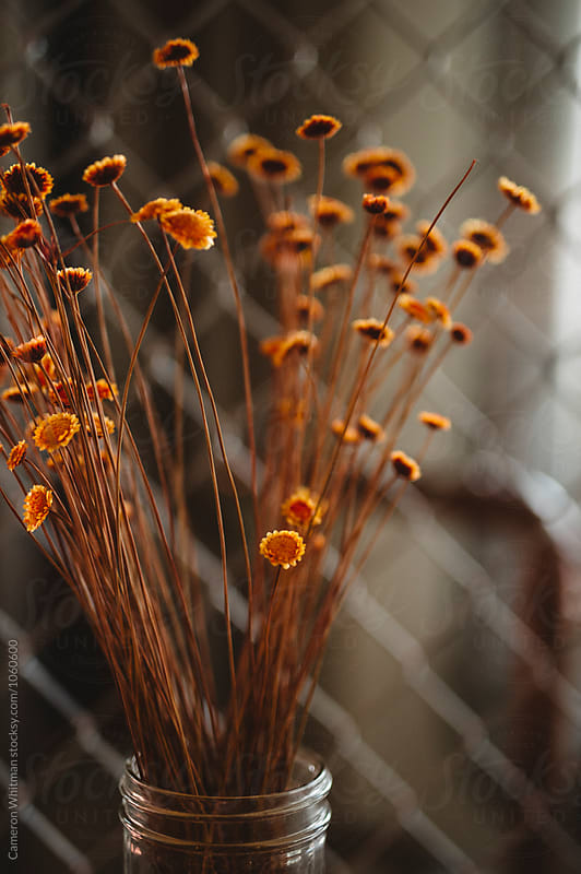 Decorative Dried Flowers by Cameron Whitman for Stocksy United