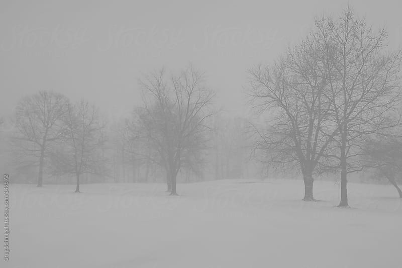 Black and white winter snow on the landscape by Greg Schmigel for Stocksy United