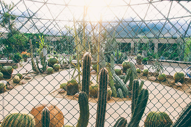 Cactus farm through fence by Jovo Jovanovic for Stocksy United