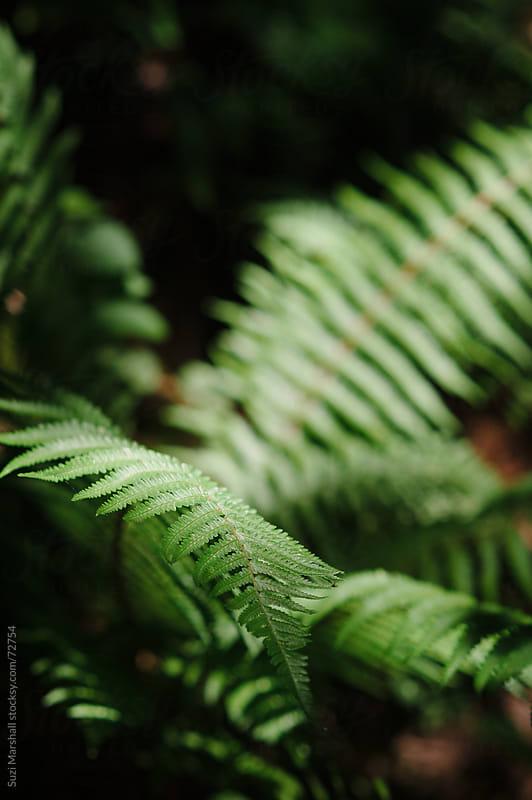 Sunlight falling on a fern plant by Suzi Marshall for Stocksy United
