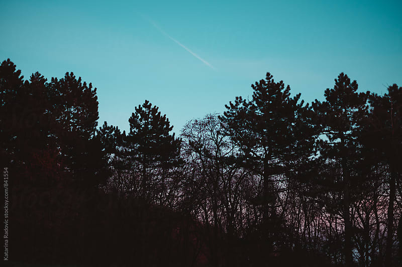 Blue Sky Above the Woods by Katarina Radovic for Stocksy United