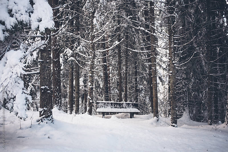 Bench in the Woods by Good Vibrations Images for Stocksy United