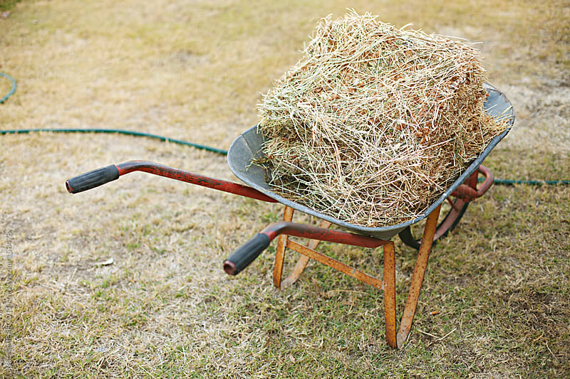 wheel barrow filled with straw waiting to feed farm animals by Natalie JEFFCOTT for Stocksy United