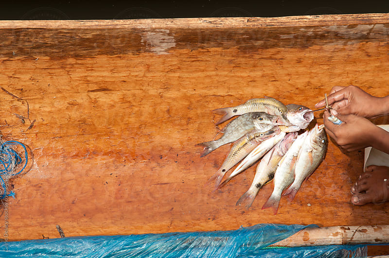 Traditional fishing catch in a canoe. Shot from Above. by Caine Delacy for Stocksy United