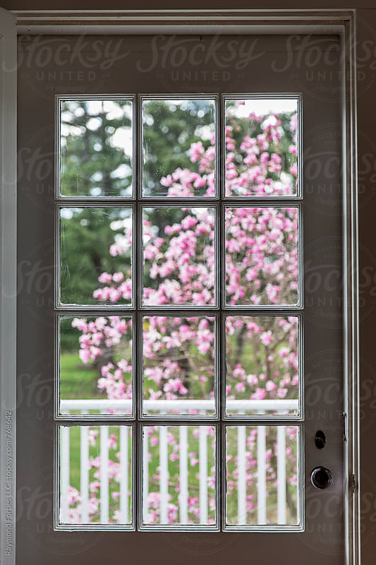 Spring Magnolia Tree Bloom by Raymond Forbes LLC for Stocksy United