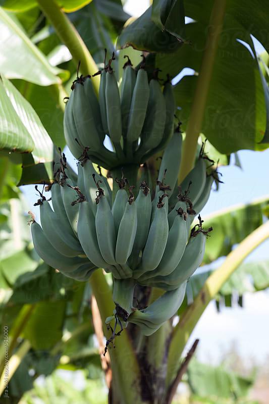 banana by jira Saki for Stocksy United