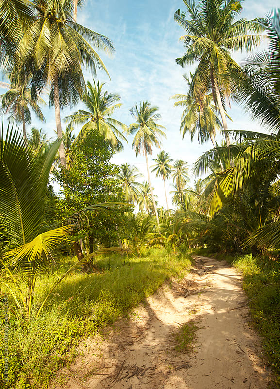 Dirt Road on Koh Phangan Island, Thailand by Goldmund Lukic for Stocksy United