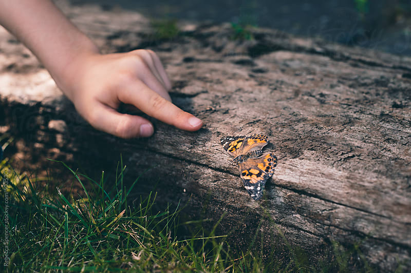 Child's hand points toward butterfly on ground by Rebecca Spencer for Stocksy United