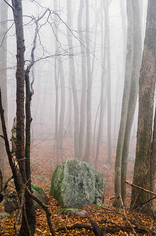boulder in misty forest by Deirdre Malfatto for Stocksy United
