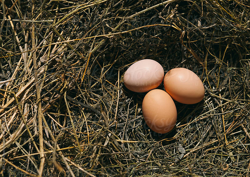 three eggs in the nest by T-REX & Flower for Stocksy United