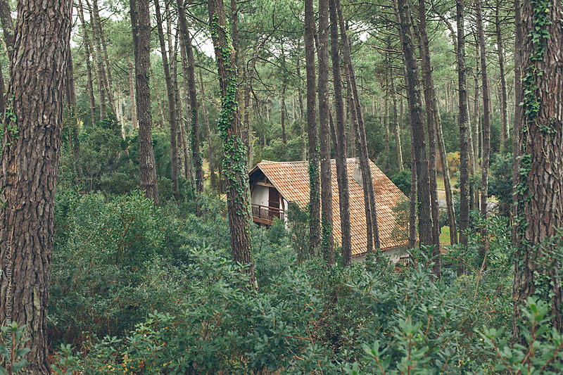 House in a pine forest  by Denni Van Huis for Stocksy United