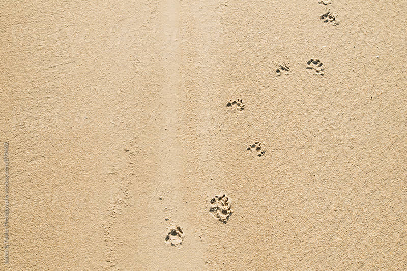 Dog footsteps by Isaiah & Taylor Photography for Stocksy United