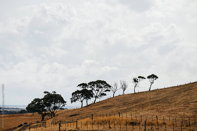Dry Australian Landscape by Rowena Naylor for Stocksy United