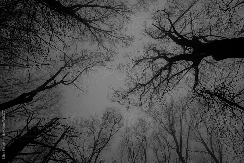 Dark scary trees and sky by Mick Follari for Stocksy United