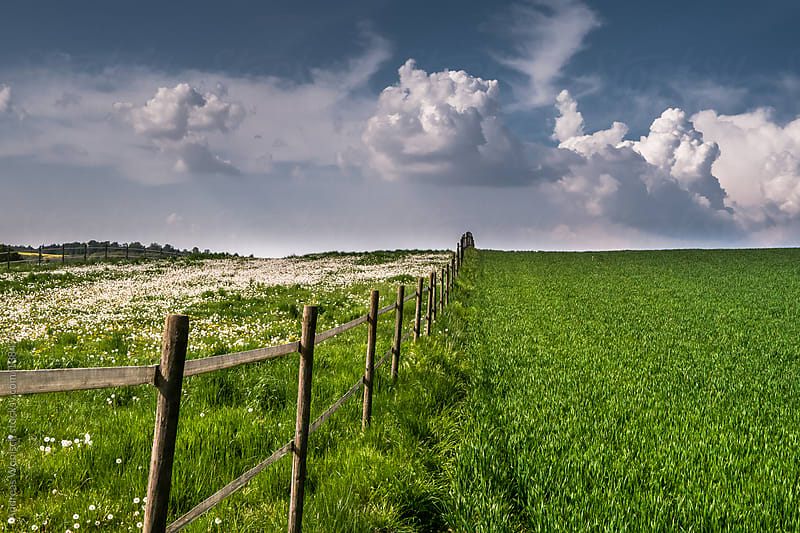 Fence through Spring Fields by Andreas Wonisch for Stocksy United