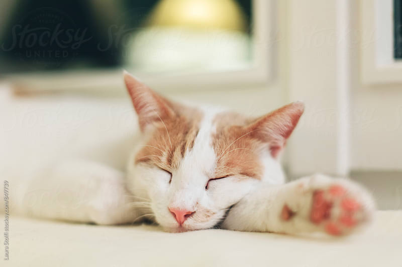 Close up of happy cat sleeping hard on blanket on windowsill in warm abat-jour light by Laura Stolfi for Stocksy United