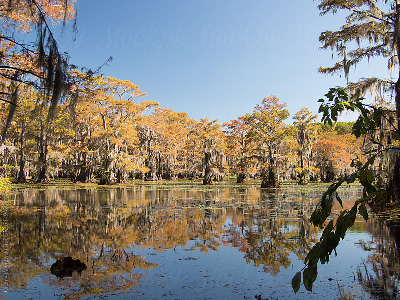 Autumn colors on the bayou by Jeremy Pawlowski for Stocksy United