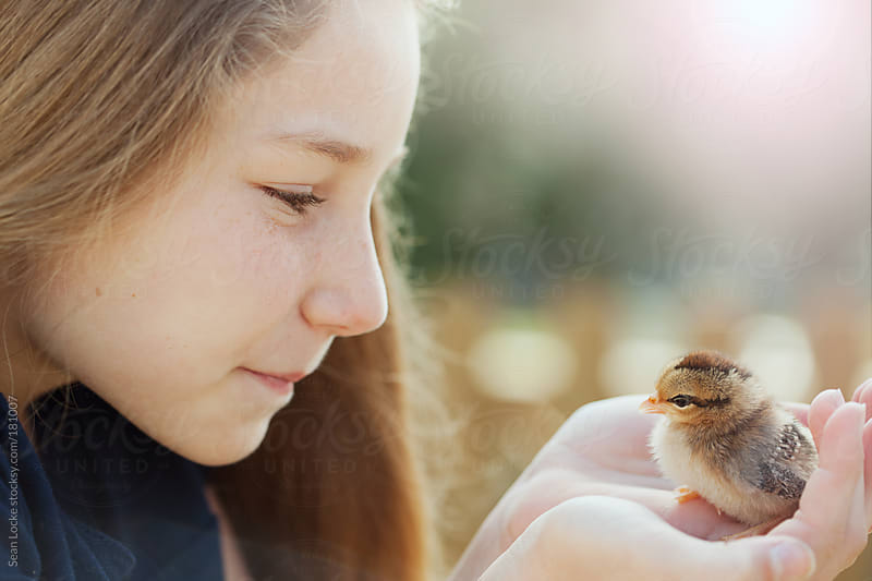 Chicks: Girl Holds Cute Baby Chick In Hands by Sean Locke for Stocksy United