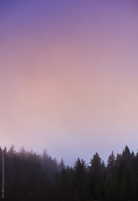Pink violet sunset over a forest by Luca Pierro for Stocksy United