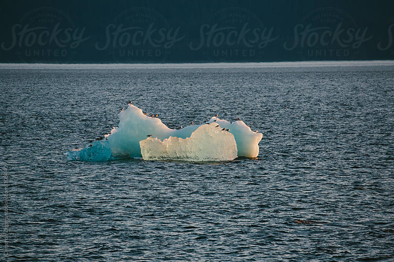 birds on iceberg in the Inside Passage, Alaska by Cameron Zegers for Stocksy United