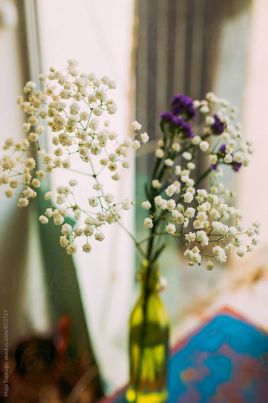 Beautiful flower indoors by Maja Topcagic for Stocksy United
