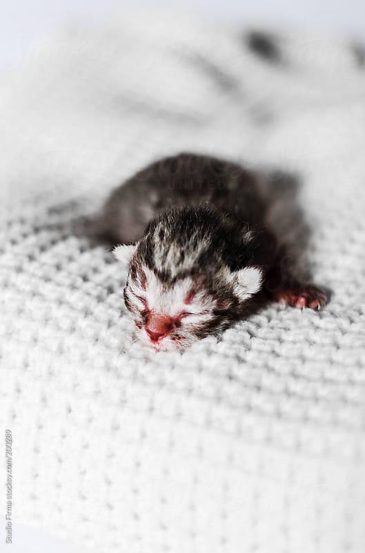 Newborn colorful kitten by Studio Firma for Stocksy United