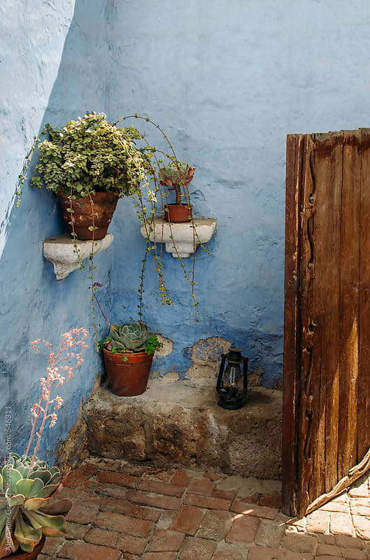 Flower Pots At Blue Wall by Alexander Grabchilev for Stocksy United