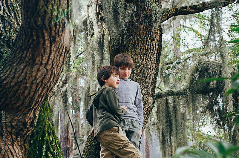 Two Boys in a Spanish Moss Tree by Ali Deck for Stocksy United